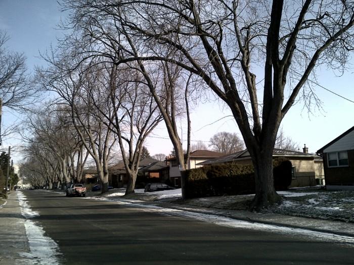 Bowman Street - 16 Jan 2014