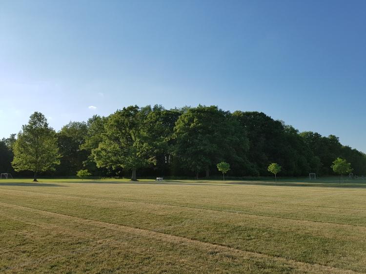 Ghost Tree Landscape, Churchill Park, Hamilton (Ont). Photo taken on June 17th, 2016.